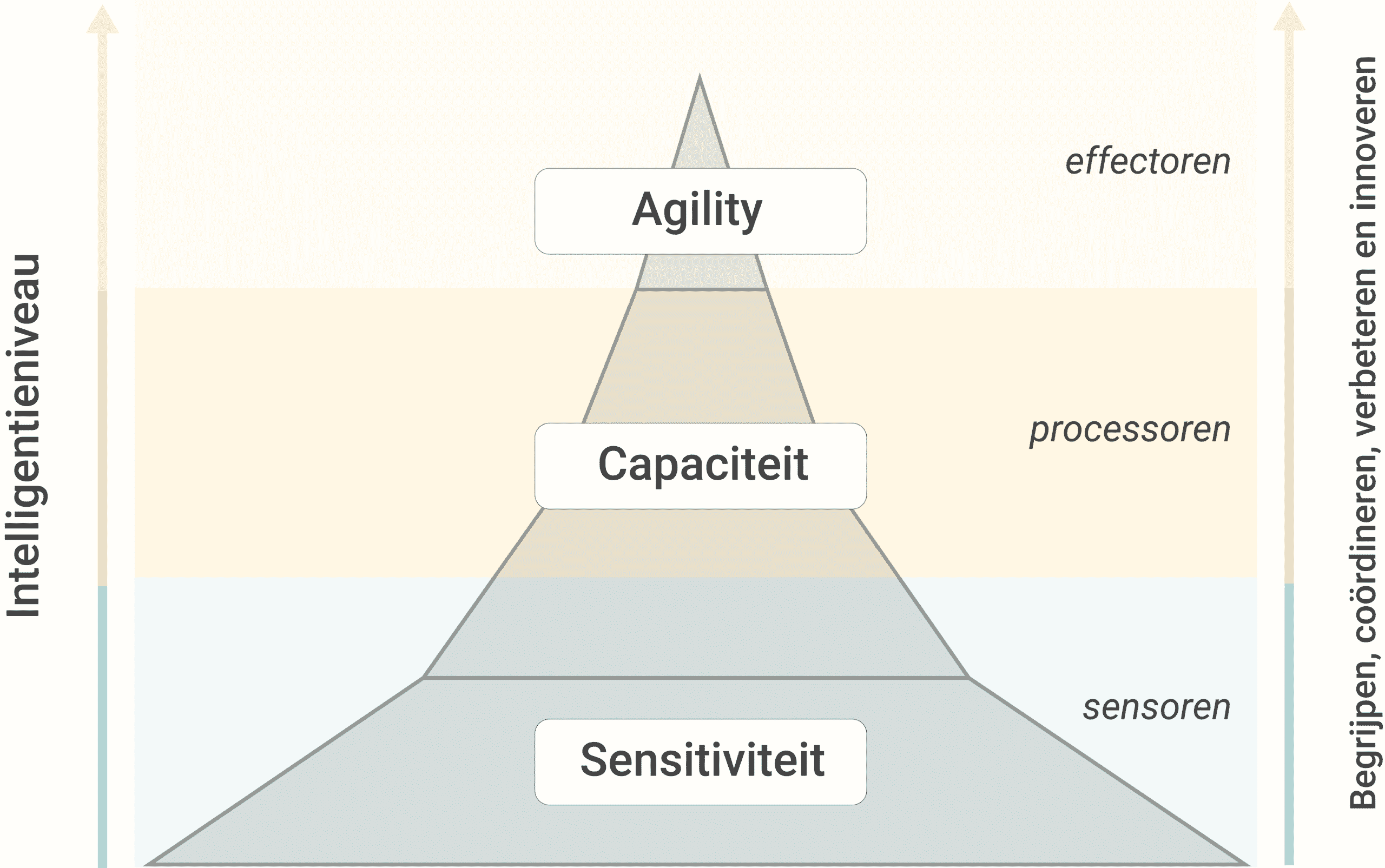 The three stages of the Intelligent Organization