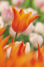 One version of the truth